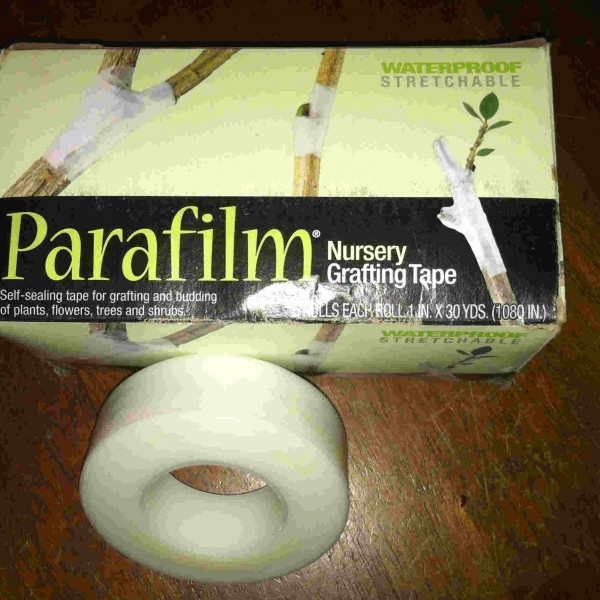 parafilm-comp