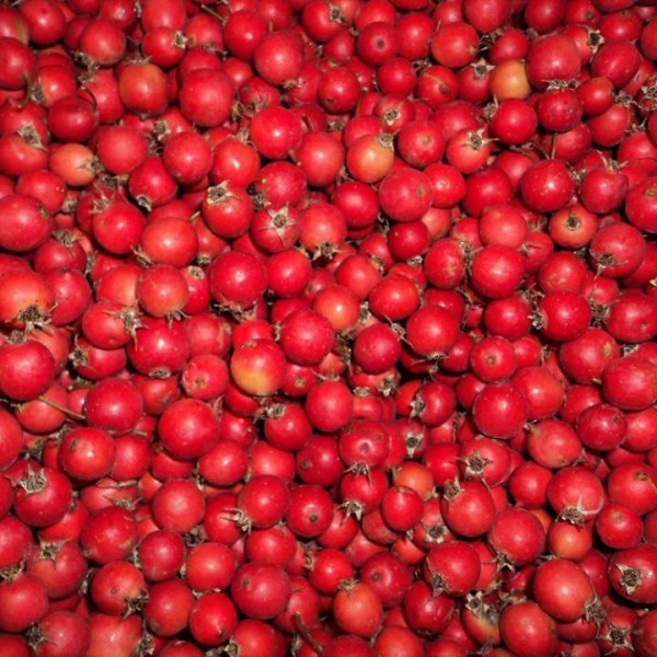 hawthorn berry.comp